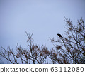 Crow perming that stops at the dead tree and cries stock Photos-photolibrary 63112080