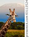 Giraffe in front of Kilimanjaro mountain, Amboseli 63113524