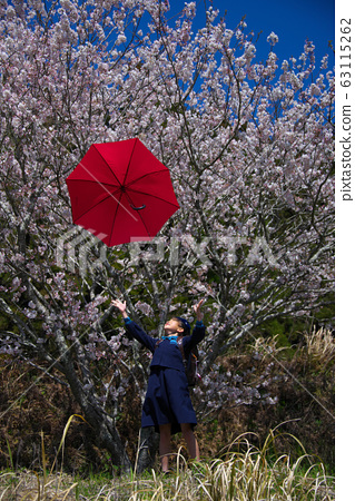 Spring, cherry blossoms, freshmen, elementary school students 63115262