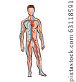 Male circulatory system. Vector illustration of blood circulation in human body. Human arterial and venous circulatory system 63118591
