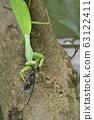 紅尾螳螂的捕食 63122411