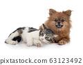 stray cat and spitz 63123492