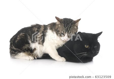 stray cats in studio 63123509