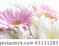 Still life of flowers on white background 63131283
