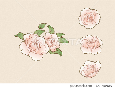 light pink roses 63148985