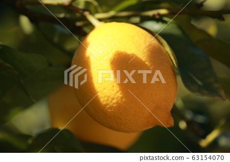 Setonai lemon 63154070