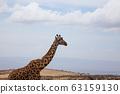 Giraffe close up. Ngorongoro Conservation Area 63159130