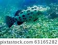 바다 사진 63165282