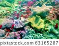 바다 사진 63165287