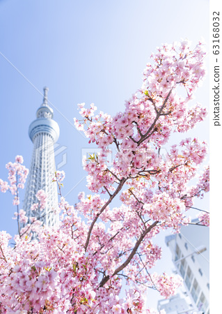 카와 벚꽃과 도쿄 스카이 트리 63168032
