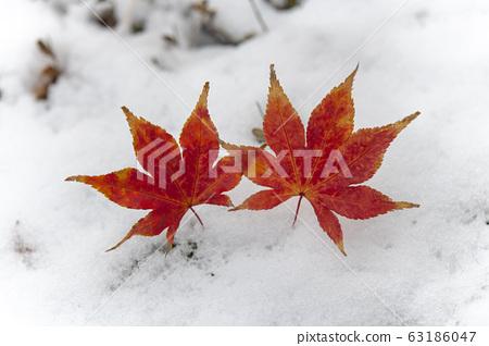 낙엽 63186047