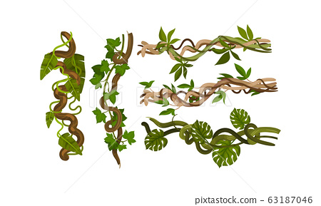 Twisted Wild Lianas with Green Twining Plants Vector Set 63187046