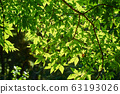Green leaves in the forest 63193026