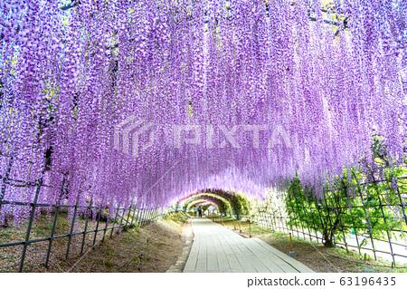 Wisteria Tunnel at Kawachi Fuji Garden 63196435