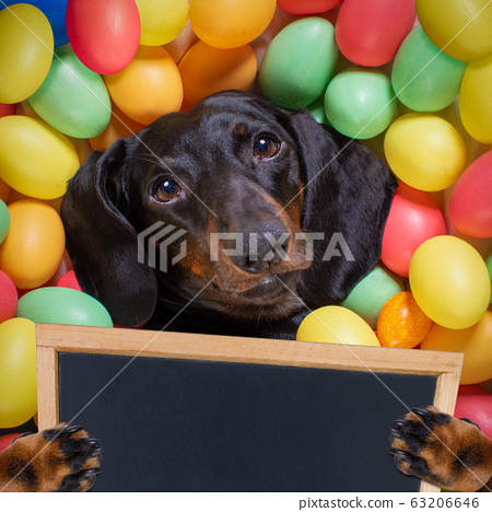 happy easter dog with eggs 63206646