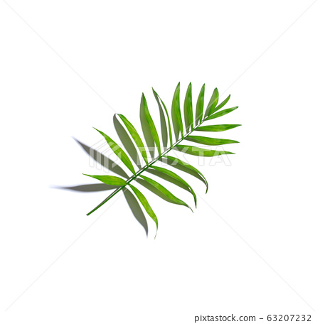 One palm leaf from above 63207232