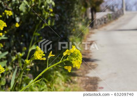 들꽃 63209740