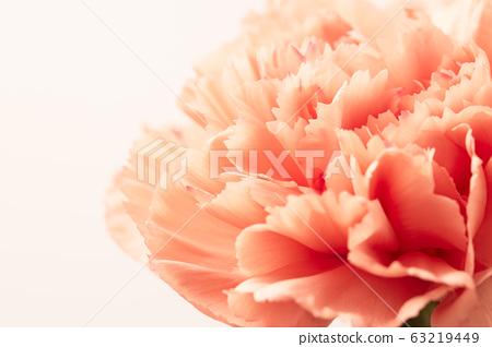 Carnation 63219449