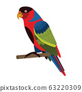 Western Black Capped Lory Parrot in Flat 63220309
