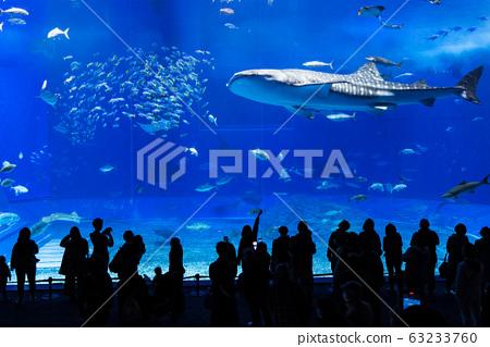 冲绳美丽海水族馆 63233760
