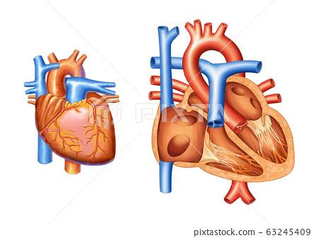 심장과 심장구조 해부도 63245409