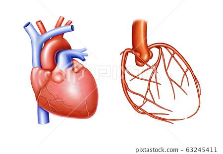 심장과 심장혈관 해부도 63245411