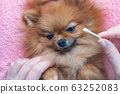 woman cleans the eyes and ears of a pomeranian dog 63252083
