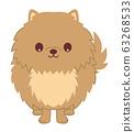 博美犬前视图图 63268533