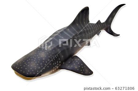 鲸鲨 63271806