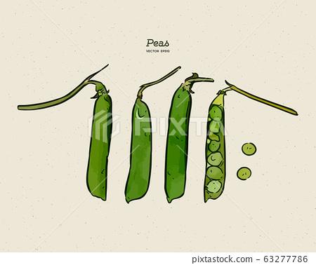 green peas, hand draw sketch vector. 63277786