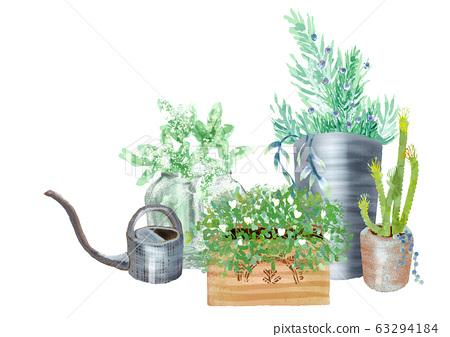 園藝盆栽的植物 63294184
