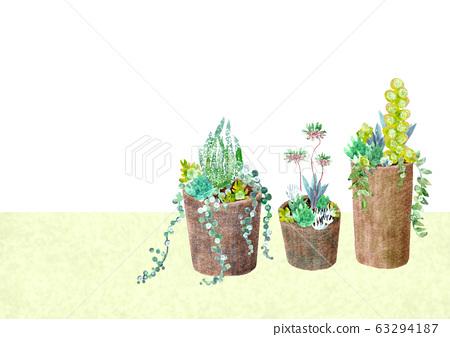 園藝盆栽的植物 63294187