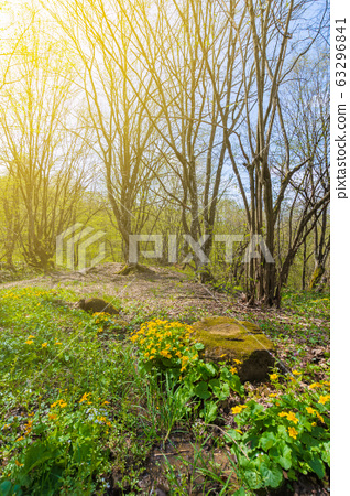 path through forest on a sunny day in spring. 63296841