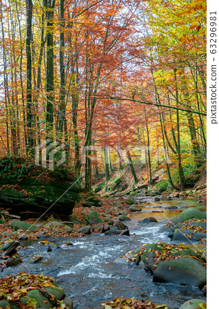 forest river in autumn 63296981