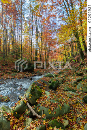 forest river in autumn 63296982