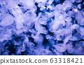 Many jellyfishes aurelia aurita 63318421