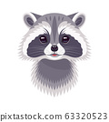 Funny Raccoon Portrait on White 63320523