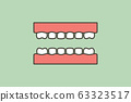 model tooth of healthy teeth 63323517