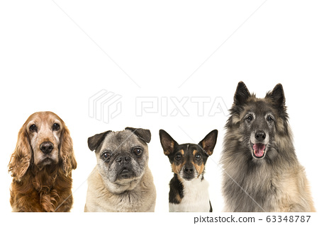 Portraits of various breeds of elderly senior dogs 63348787