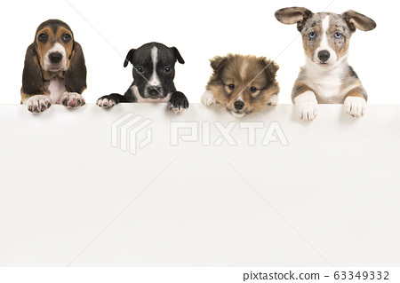 Various cute puppy dogs hanging over a white board 63349332