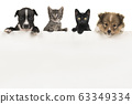 Two cute puppy dogs and two kittens hanging over a white board 63349334