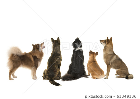 Various breeds of dogs looking up seen at the back 63349336