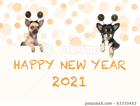 Two chihuahua dogs with happy new year 2021 wishes 63350483