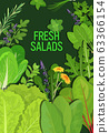 mix of different fresh salads leaves healthy nutrition vegetarian food concept vertical 63366154