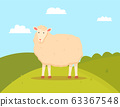 Young Sheep Domesticated Ruminant Animal, Mutton 63367548