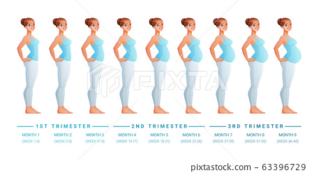 Stages of pregnancy month by month. Isolated vector illustration. 63396729