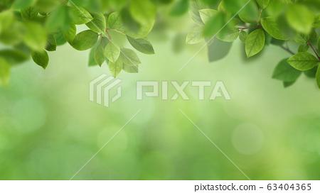 背景自然葉子綠色春天初夏夏天 63404365
