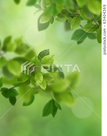背景自然葉子綠色春天初夏夏天 63404369
