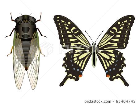 Swallowtail butterfly and swallowtail butterfly 63404745