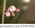 벚꽃의 시작 63407893